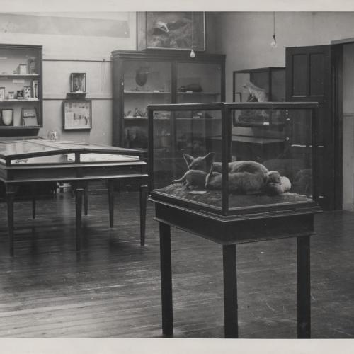 Black and white photo of the display at Herfordshire County Museum