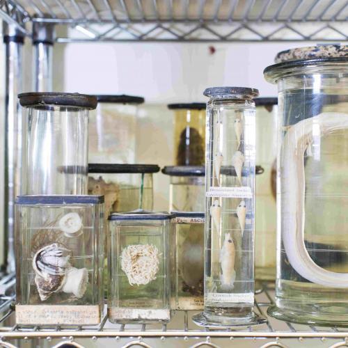Jars of newly restored preserved organisms