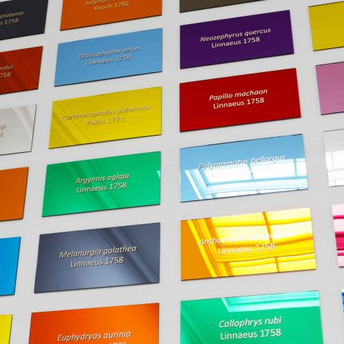 Colorful rectangular signs bearing scientific names of butterflies displayed on a white wall