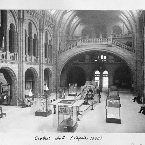 Central Hall of the Natural History Museum in 1895. ©Trustees of the Natural History Museum.