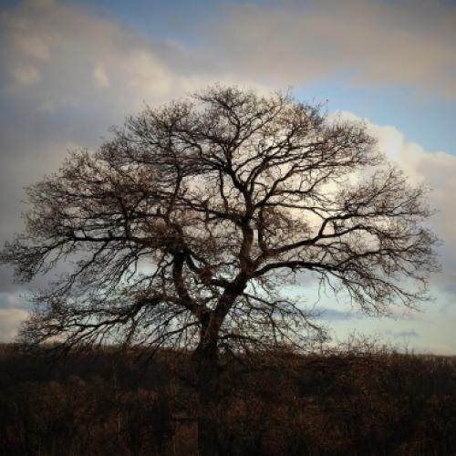 Tree- Chloe Valerie Harmsworth